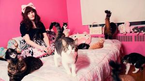 40 кошек сильной и независимой 3